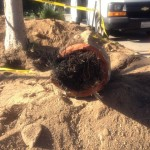main-sewer-in-altadena-1